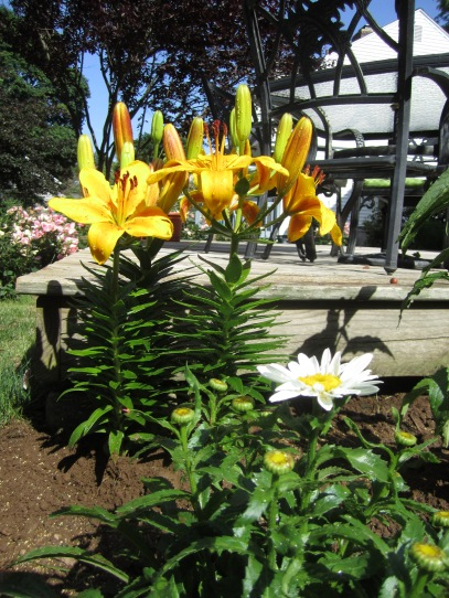 Lilies and daisy